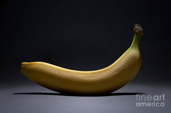 Banana Poster featuring the photograph Banana In Limbo by Dan Holm