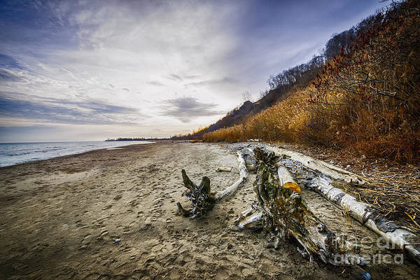 Beach Poster featuring the photograph Beach At Scarborough Bluffs by Elena Elisseeva