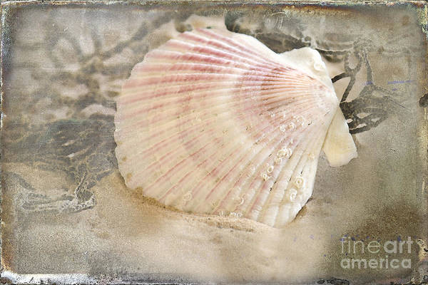 Seashell Poster featuring the photograph Beached by Betty LaRue