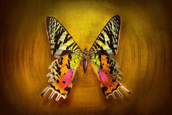 Butterfly Poster featuring the photograph Butterfly - Butterfly Of Happiness by Mike Savad