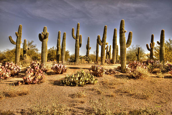 Hdr Poster featuring the photograph Cactus Patch by George Lenz