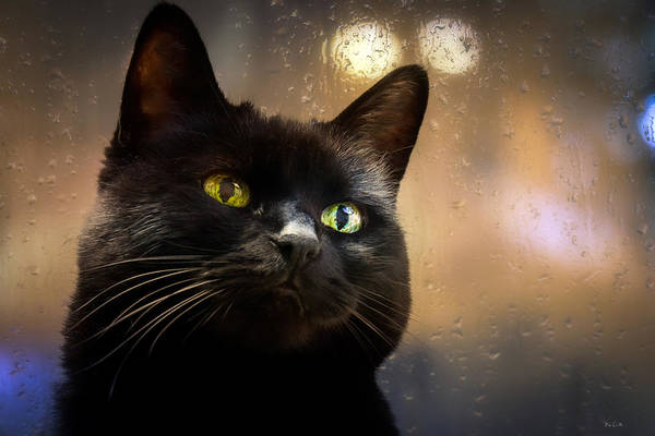 Cat Poster featuring the photograph Cat In The Window by Bob Orsillo