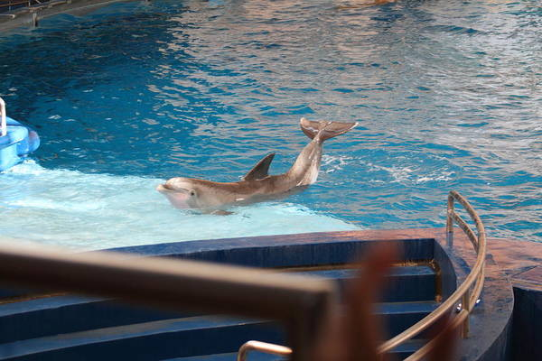 Inner Poster featuring the photograph Dolphin Show - National Aquarium In Baltimore Md - 1212104 by DC Photographer