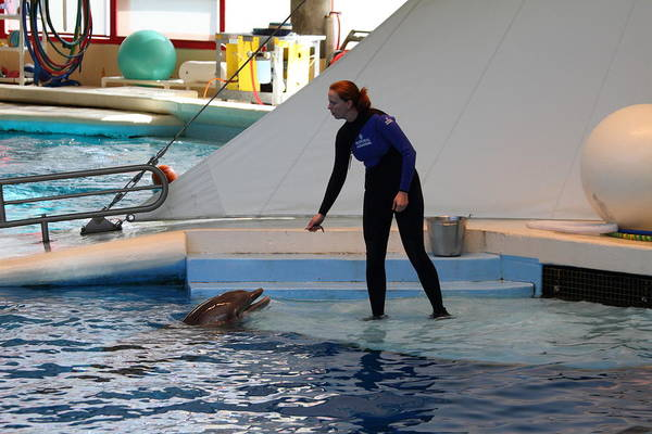 Inner Poster featuring the photograph Dolphin Show - National Aquarium In Baltimore Md - 1212196 by DC Photographer
