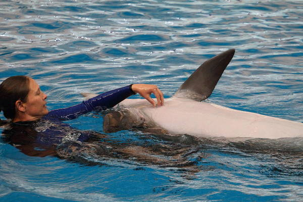 Inner Poster featuring the photograph Dolphin Show - National Aquarium In Baltimore Md - 1212231 by DC Photographer