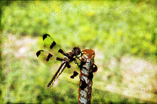 Dragonfly Poster featuring the photograph Dragonfly Eating Breakfast by Andee Design