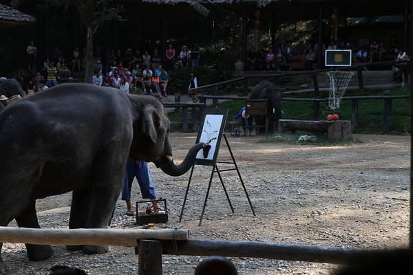 Chiang Poster featuring the photograph Elephant Show - Maesa Elephant Camp - Chiang Mai Thailand - 011344 by DC Photographer