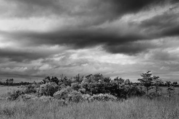 Bush Poster featuring the photograph Everglades Storm Bw by Rudy Umans