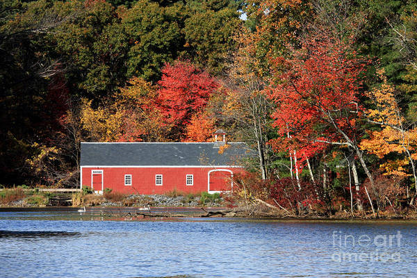 Foliage Poster featuring the photograph Fall At The Mill by Jayne Carney