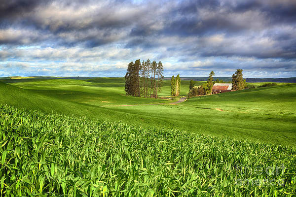 Barn Poster featuring the photograph Farmstead by Beve Brown-Clark Photography