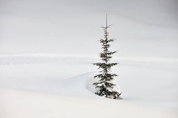 Fir Poster featuring the photograph Fir Tree And Lots Of Snow In Winter Kleinwalsertal Austria by Matthias Hauser