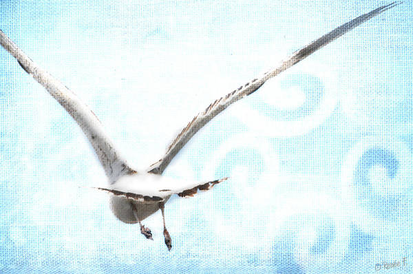 Seagull Poster featuring the digital art Fly Away by Renee Forth-Fukumoto