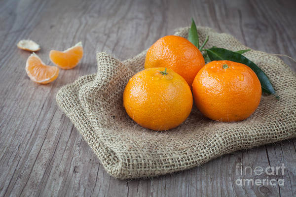 Tangerine Poster featuring the photograph Fresh Tangerine by Sabino Parente
