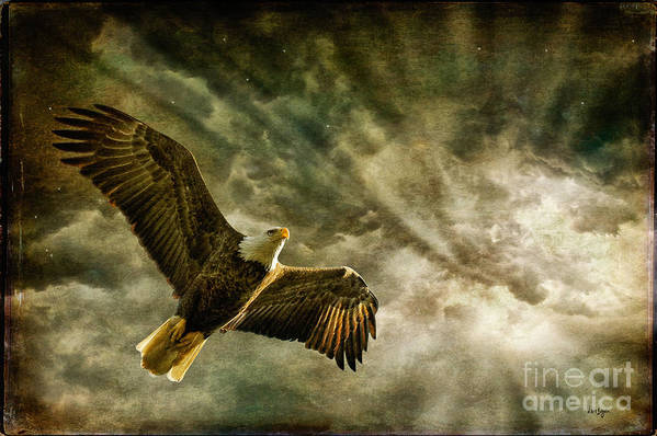 Eagle Poster featuring the photograph Honor Bound In Blue by Lois Bryan