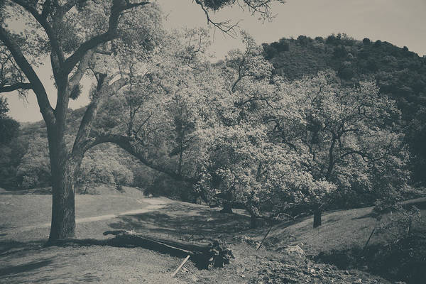 Sunol Regional Wilderness Poster featuring the photograph If You Get Lonely by Laurie Search