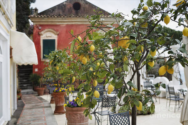 Citrus Aurantium Poster featuring the photograph Lemon Trees On A Villa Terrace by George Oze