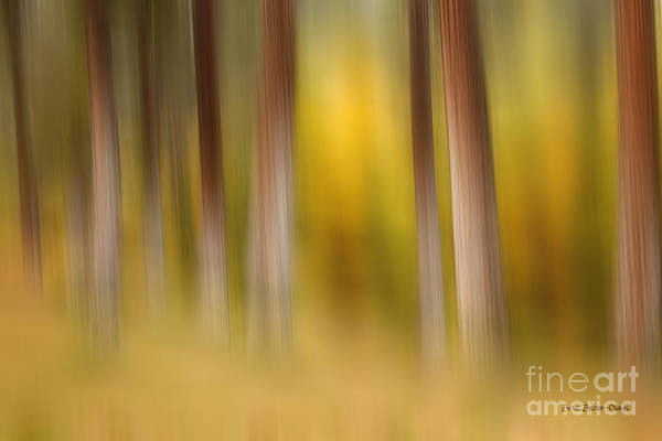 Abstract Poster featuring the photograph Lost In Autumn by Beve Brown-Clark Photography
