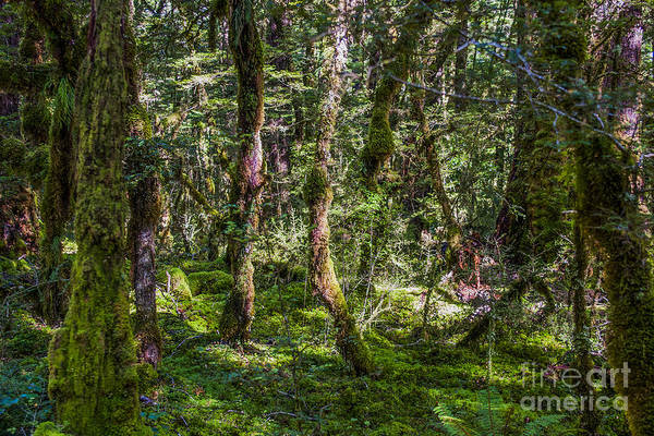 Mystery Poster featuring the photograph Mysterious Forest by Patricia Hofmeester