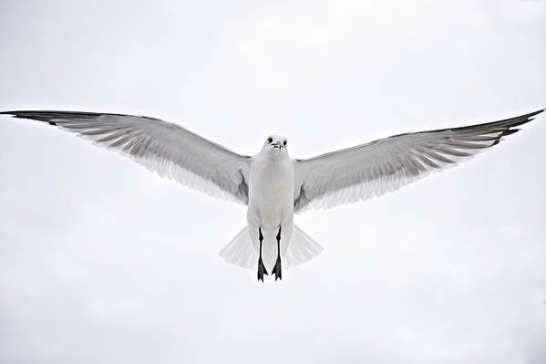 Seagull Poster featuring the photograph Peace On Earth Good Will To Men by Bonnie Barry