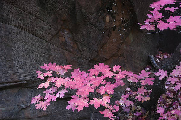 Fall Poster featuring the photograph Pink Fall Colors In Sedona Arizona by Dave Dilli