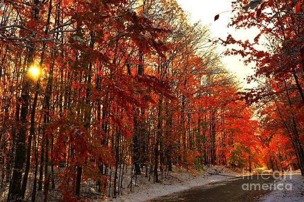 Red Autumn Poster featuring the photograph Red Autumn Road In Snow by Terri Gostola