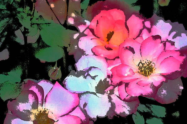 Floral Poster featuring the photograph Rose 197 by Pamela Cooper