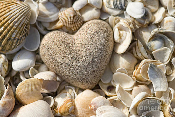 Sea Shell Poster featuring the photograph sea shell Heart by Boon Mee