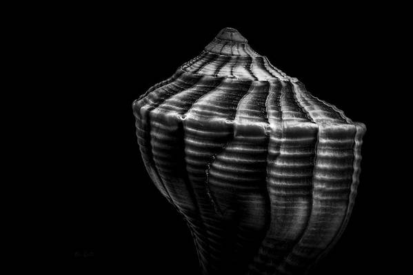 Shell Poster featuring the photograph Seashell On Black by Bob Orsillo