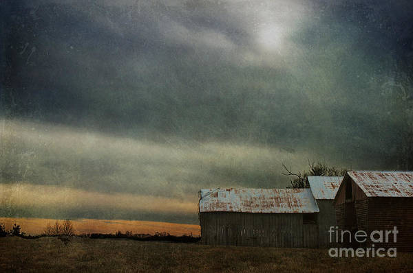 Shelter Poster featuring the photograph Shelter by Terry Rowe