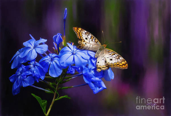 Butterfly Poster featuring the digital art Silver And Gold by Lois Bryan