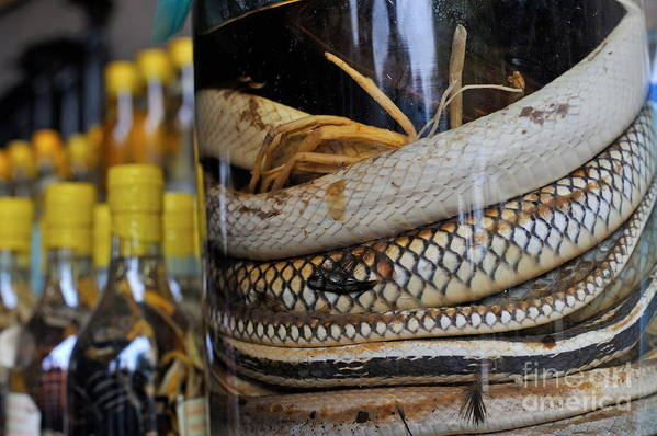 Alcohol Poster featuring the photograph Snakes In Snake-flavoured Alcohol Bottles by Sami Sarkis
