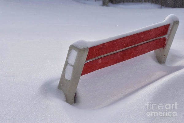 Snow Covered Poster featuring the photograph Snow Covered Bench by Thomas Woolworth