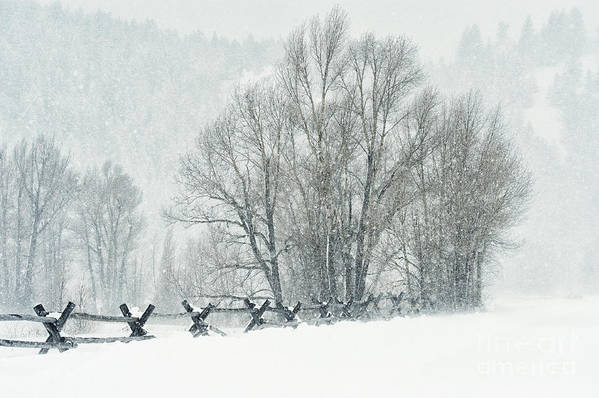 Grand Teton Poster featuring the photograph Snowy Day In The Tetons by Sandra Bronstein