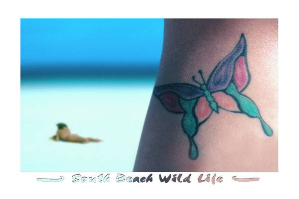 South Beach Poster featuring the photograph South Beach Wild Life by Mike McGlothlen