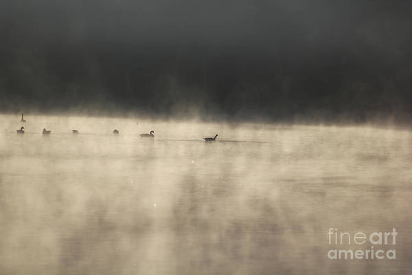 Lake Photographs Poster featuring the photograph Sunrise Geese by Melissa Petrey