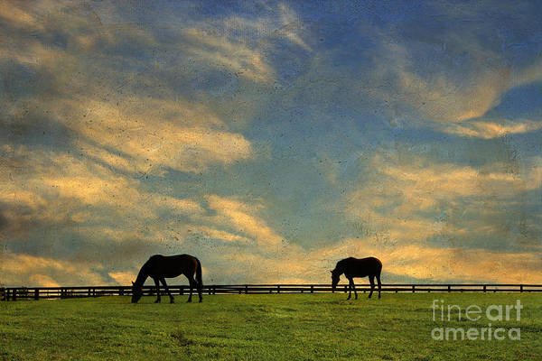 Painterly Poster featuring the photograph Sunrise Graze by Darren Fisher