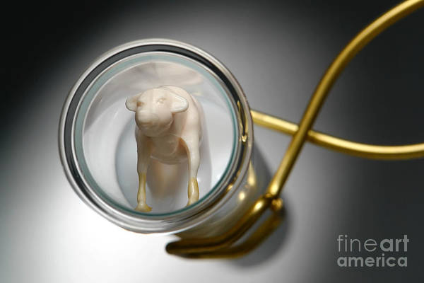 Genetic Poster featuring the photograph Test Tube Calf by Olivier Le Queinec