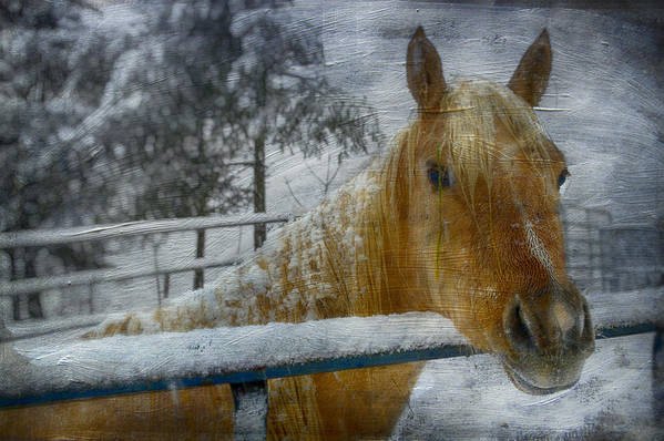 Horse Poster featuring the photograph Time Stands Still by Kathy Jennings