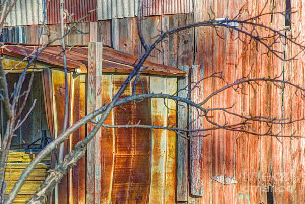 Tree Poster featuring the photograph Tree And Rust by Jim Wright