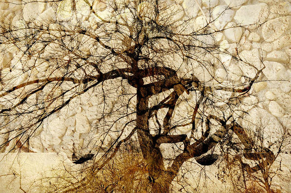 Tree Poster featuring the photograph Tree Of Life by Ann Powell