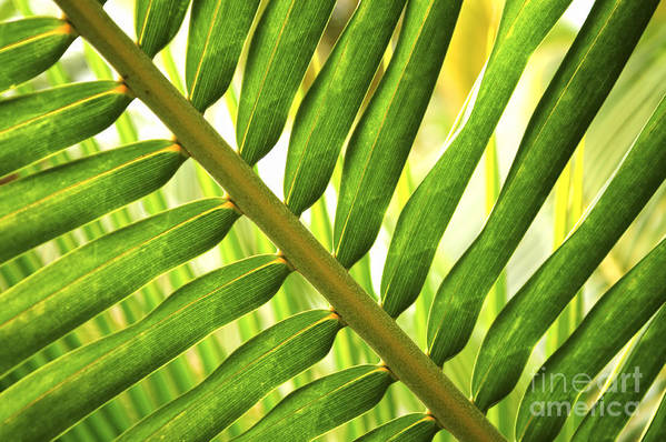 Palm Poster featuring the photograph Tropical Leaf by Elena Elisseeva