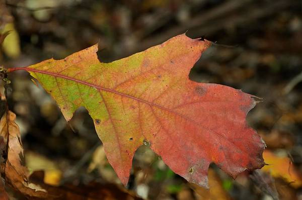 Autumn Poster featuring the photograph Turn A Leaf by JAMART Photography