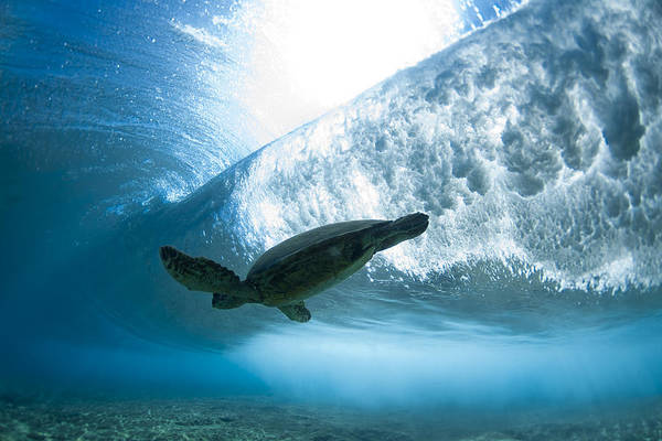 Under Water Poster featuring the photograph Turtle Clouds by Sean Davey