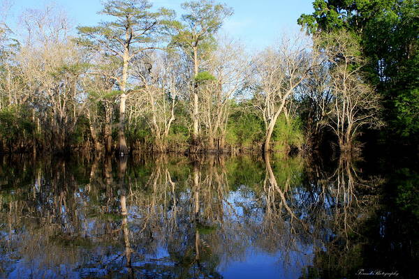 River Poster featuring the photograph Ultimate Reflection by Debra Forand