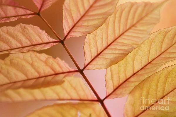 Leaves Poster featuring the photograph Veins by Andrew Brooks