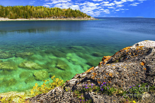 Landscape Poster featuring the photograph Violets At Georgian Bay by Elena Elisseeva