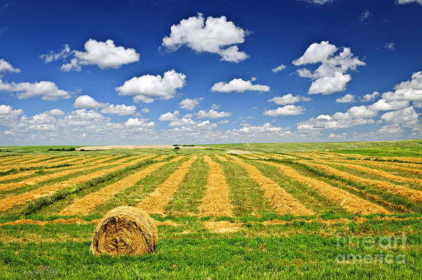 Agriculture Poster featuring the photograph Wheat Farm Field And Hay Bales At Harvest In Saskatchewan by Elena Elisseeva