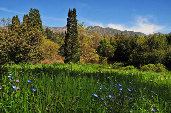 Wildflower Poster featuring the photograph Wildflower Meadow At Descanso Gardens by Lynn Bauer