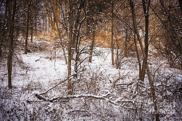 Winter Poster featuring the photograph Winter Forest by Elena Elisseeva