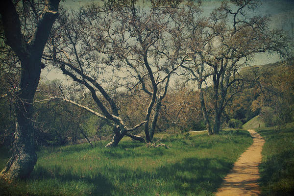 Sunol Regional Wilderness Poster featuring the photograph You Smiled And I Knew by Laurie Search